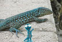 Bonbi / ¡Entra y mira todas las fotos de nuestro querido amigo #Bonbi! Encuentra más en es.aruba.com