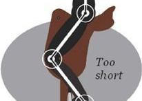horse theory