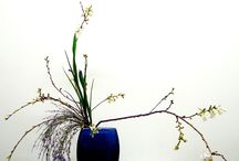 IKEBANA by SULLY / I am learning Ikebana, these are some of my work