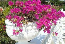 Flora and Fauna  / by Jamaica Inn