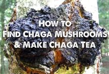 Chaga-hvordan