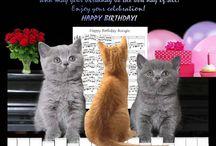 Cat Birthday Cards