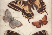 Butterfly llustrations / Beautiful, dainty and elegant butterflies!