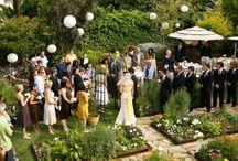 Wedding / by Carolyn Orchard
