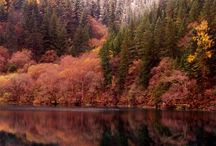 The Seasons / by Peg McCaughey