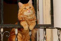 My kitty world
