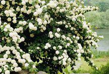Szépséges növények