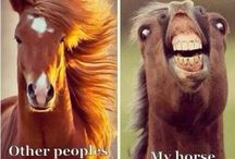 Funny Horse Pictures / Pictures we think are worth a giggle