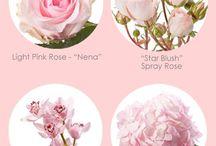 Flower Information