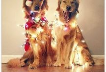 Fun: Animals & Christmas Lights / A board dedicated to comical snaps of adorable animals and fairy lights. / by Lights4fun