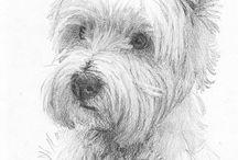 Westie drawings