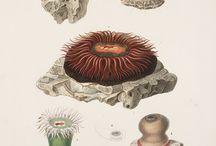 botánica-científica