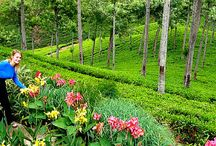 Sri Lanka / All about Sri Lanka's attractions, adventures, culture, food, and accommodations.