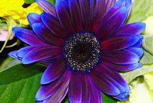 Flowers! / by Neva Alderman