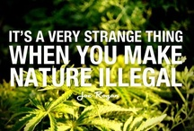 Legalize it we think so