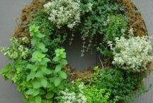 Gardening Ideas / by Cathy Boyd