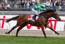 Horse Racing Champions