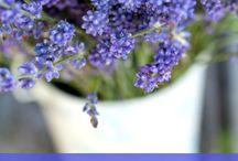 11 rastlin proti komarom