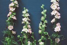 Fiore / All the pretty flowers