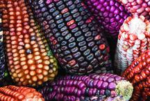 Gastronomía Mexicana, ingredientes y utensilios / Gastronomía Mexicana, ingredientes y utensilios