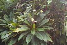 flore du cambodge