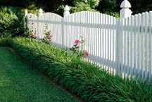 monkey grass / by Marcie McRae