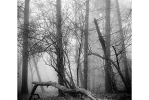 In Natura / Fotografia di Simona Savini per Livin'art