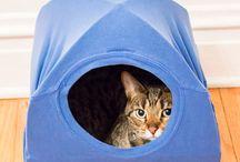 tenda kucing