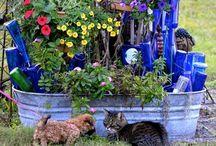 galvinized beauty in the garden / by Jean Mullins