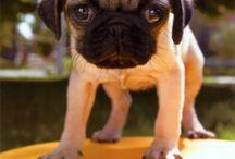 Kedves szöveges kutya képek