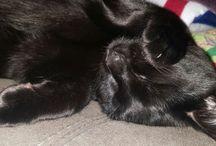 My baby Cleo ❤