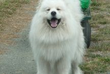 My Dog Blogs / My published blogs on Russian Dog website