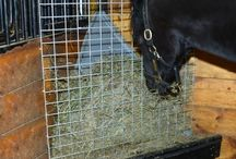 Stall & hest