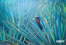 Agave / Actualmente se reconocen más de 20 especies de agave para destilar mezcal.