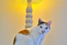 furry friends / Even your pet appreciates a good recycled design!