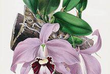 Botany illust
