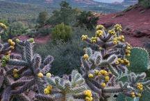 Arizona: Cactus and other Southwest Plants