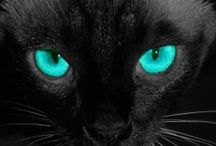 Cat Eyes / by TheCatSite.com