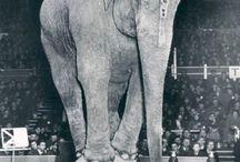 Circus animal / About circus animals