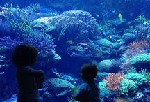 Children and Aquariums / Little ones love watching the aquarium