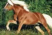 Horse & Mule Love / by Tabitha Flippen