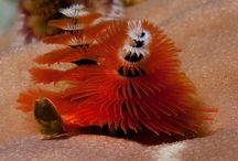 Weird animals / Weird and strange looking animals - reference for creature design