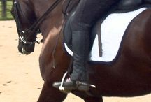Horse & Rider Exercises / by Cathrin Ebi