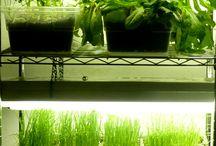 Indoor garden light system