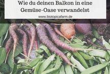 Mission Balkon