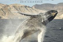 2015 Whales Calendar