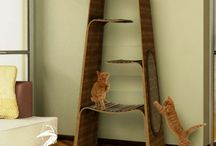 Katten speelkamer