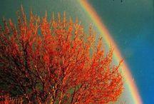 Railbow