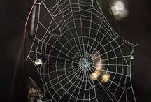 Spider Webs / by Babs