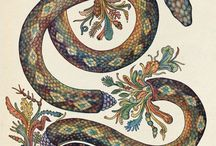 // snake medicine //